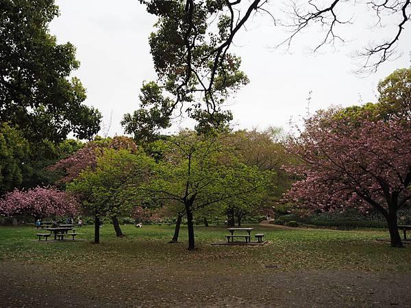 180405-4 清澄庭園 (29).JPG