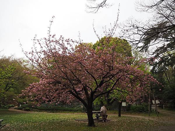 180405-4 清澄庭園 (30).JPG