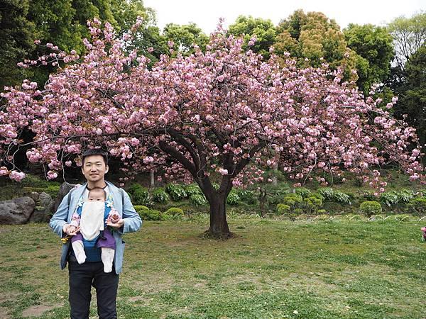 180405-4 清澄庭園 (31).JPG