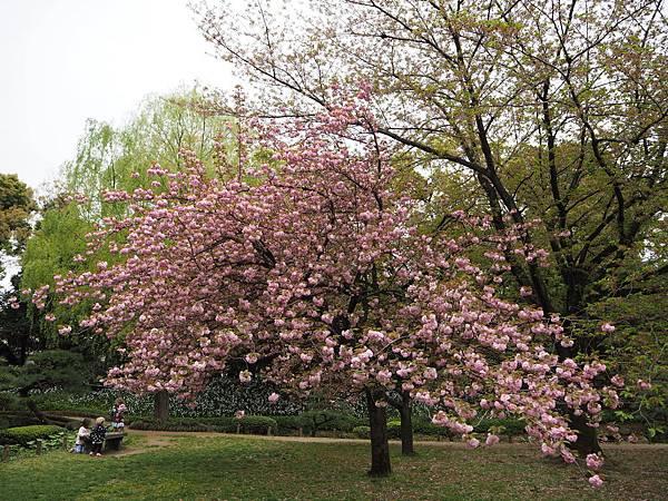 180405-4 清澄庭園 (32).JPG