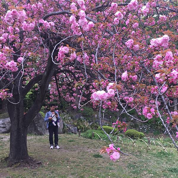 180405-4 清澄庭園 (35).jpg