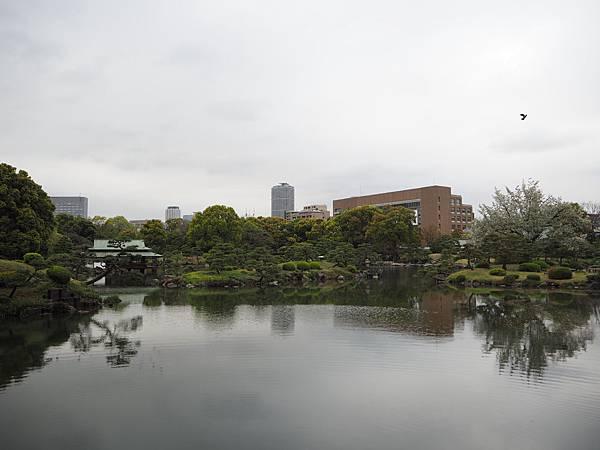180405-4 清澄庭園 (43).JPG