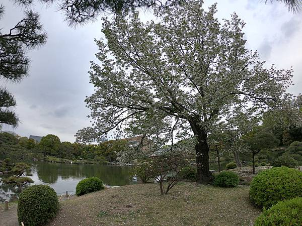 180405-4 清澄庭園 (46).JPG