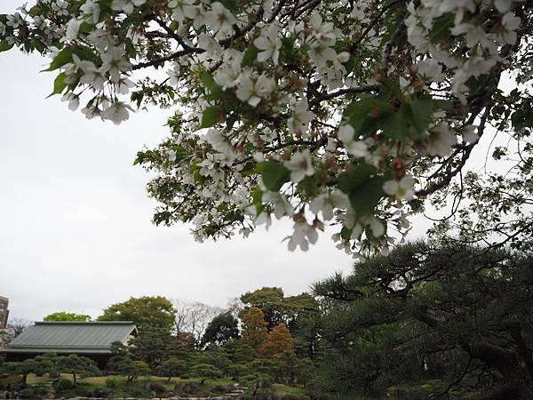 180405-4 清澄庭園 (48).JPG