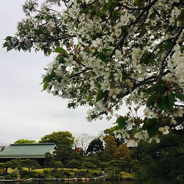 180405-4 清澄庭園 (49).jpg