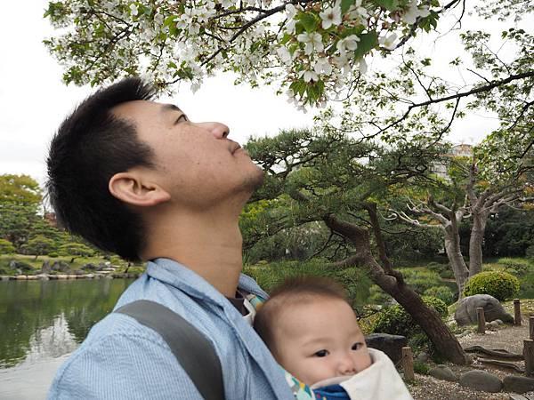 180405-4 清澄庭園 (50).JPG