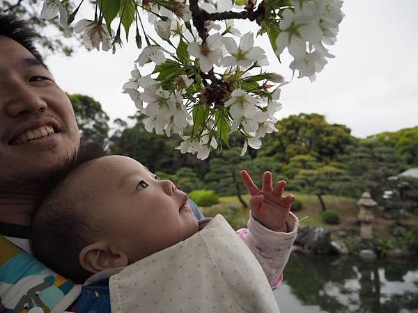 180405-4 清澄庭園 (52).JPG