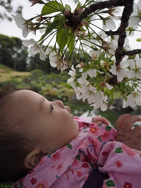180405-4 清澄庭園 (53).JPG