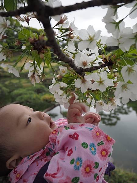 180405-4 清澄庭園 (54).JPG