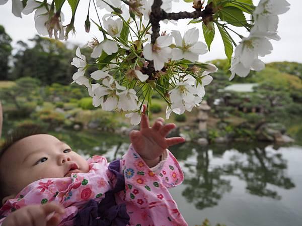 180405-4 清澄庭園 (56).JPG