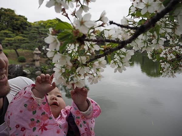 180405-4 清澄庭園 (57).JPG