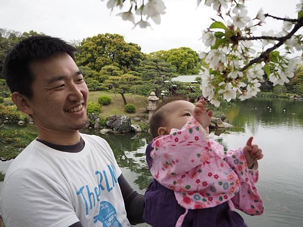 180405-4 清澄庭園 (58).JPG