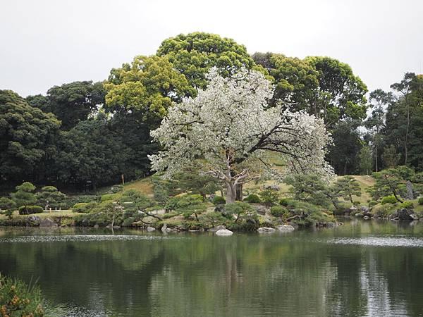180405-4 清澄庭園 (59).JPG