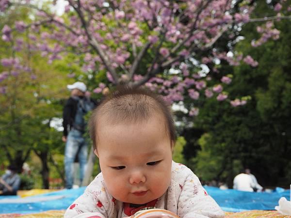 180407-1 上野恩賜公園 (4).JPG
