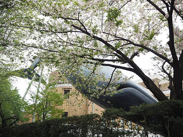 180407-1 上野恩賜公園 (17).JPG