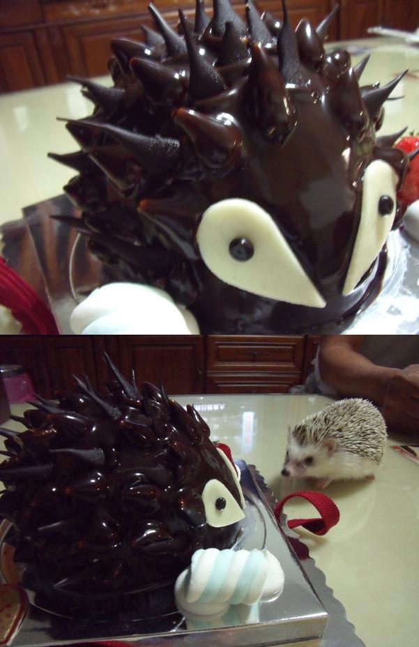 1.活力熊蛋糕