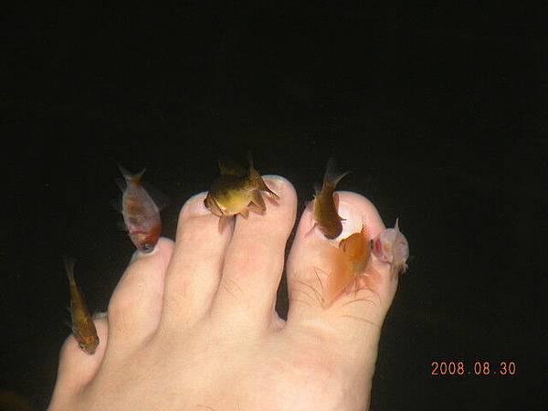 魚真的在啄腳