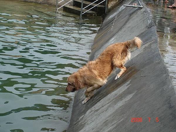 我要跳水摟  帥