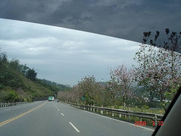 沿路的櫻花