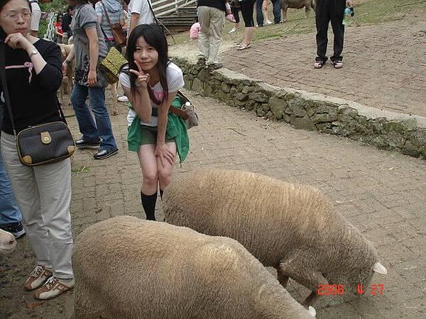 滿地羊便便