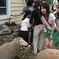 有隻很可怕的羊會撞人