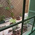 沙發區後面的小小花圃