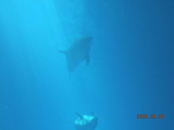 海豚真的很可愛