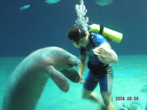 海象比我想的小一點
