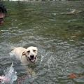 我最愛玩水了