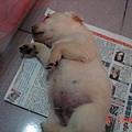 睡在報紙上