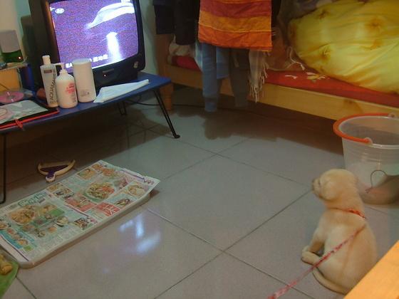 我在看電視啦