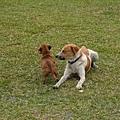 兩隻狗狗感情超好的