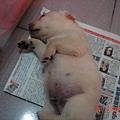 地板好睡ㄋㄟ.JPG