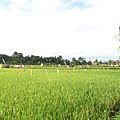 再一張田野view