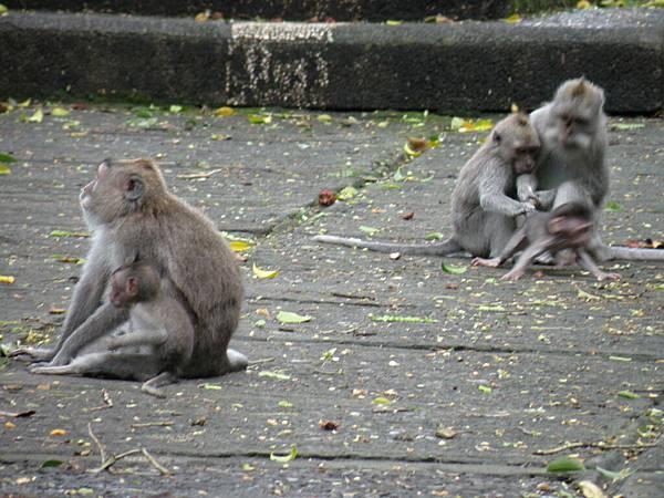 可憐的小猴