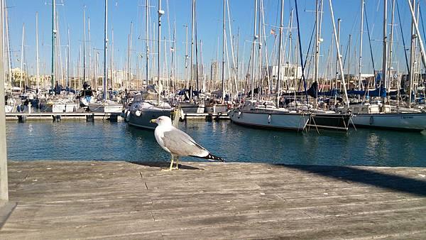 西班牙20161202-DSC_2478.JPG