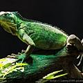 lizard-1085553_640.jpg