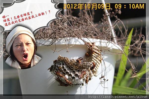 長腳蜂001