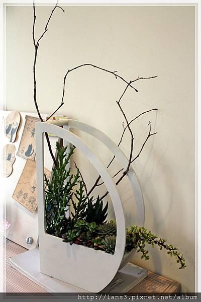 厚葉盆栽~004