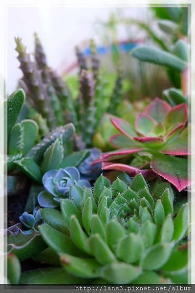 厚葉植物群004