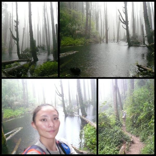 006~美美的森林