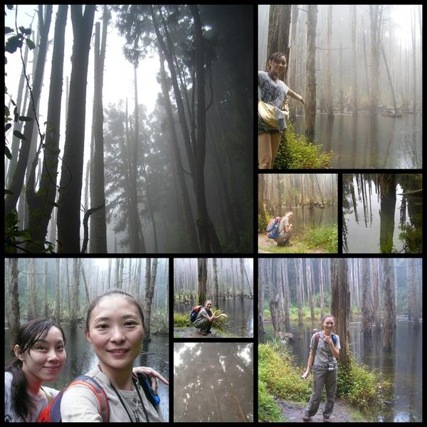 007~美美的森林