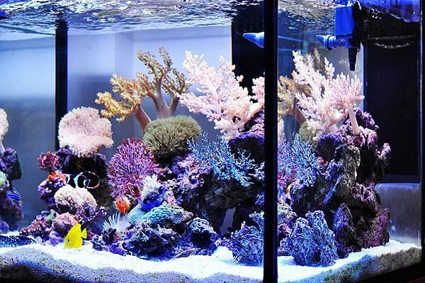 2010.06.27-D90-大哥海水魚缸 (11).JPG
