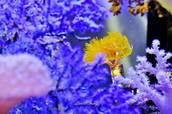 2012.06.02-D90-Marine Aquarium (6).JPG