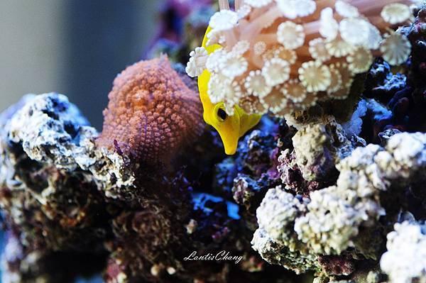 2012.09.10-D90-Marine Aquarium (6).jpg