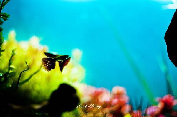 2012.08.24 (27)-我的水草缸.jpg