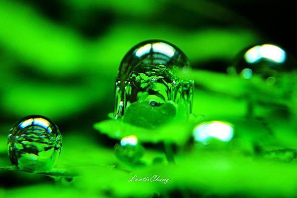 2012.10.14-我的水草缸 (12).jpg