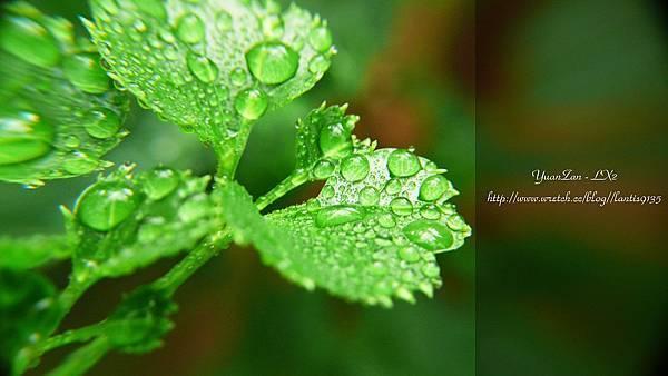 2012.07.05-LX2-植物園的家 (6).JPG
