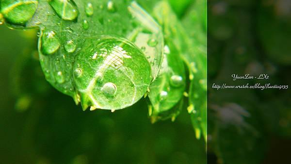 2012.07.05-LX2-植物園的家 (10).JPG