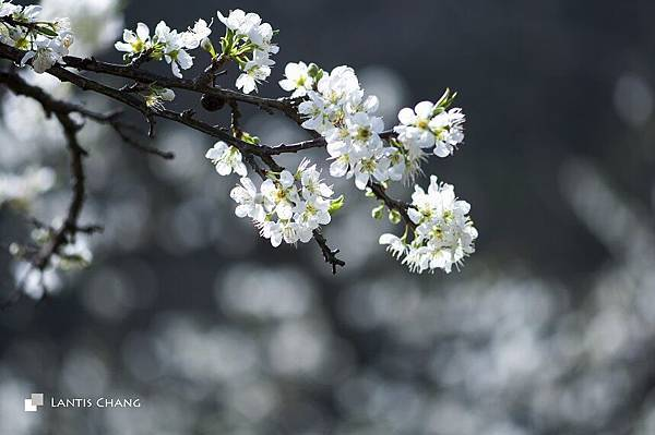 2014.02.03-春節旅遊 (29).jpg